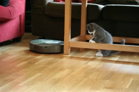 Cat playing with a quiet robotic vacuum cleaner