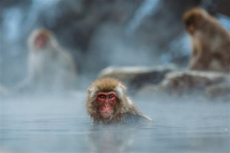Hydrotherapy on a Budget – The Ape's Best Hot Tubs For The Money!
